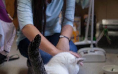 Feline Friendship: Anya and Boris
