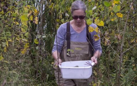 Channeling Rachel Carson: Mentoring Women in Science