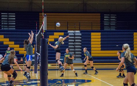 Beaver volleyball picked to win the IIAC crown